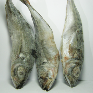 Fish Mark2