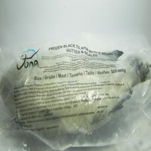 Frozen tilapia
