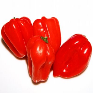 Hot-Peppers-Habaneros1