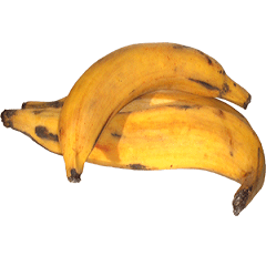 Yellow-Plantain1